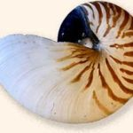 shell-striped-sm