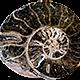 spiral-fossil-silo-80